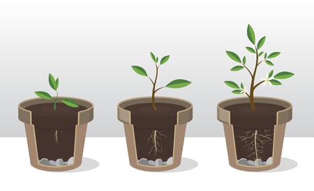 Set of gardening elements, Phases of growth of a plant with the roots and shoots.