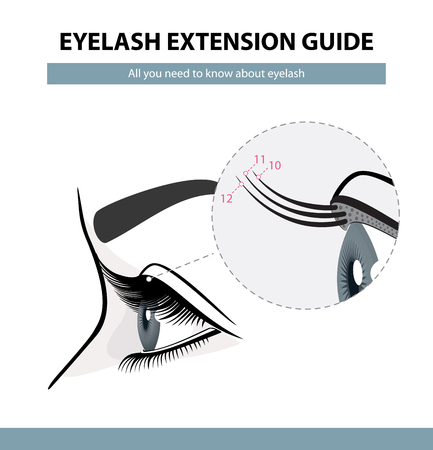 Eyelash extension guide. Eyelashes grow. Eyelid. Side view. Infographic vector illustration. Training poster  Illustration