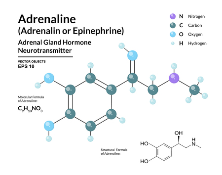 Adrenaline Hormone. Epinephrine. Neurotransmitter. Fight or Flight Response. Structural Chemical Molecular Formula and 3d Model. Atoms are Represented as Spheres with Color Coding 向量圖像