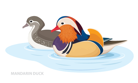 Two Mandarin Ducks swim in the water. Asian Birds. Male and Female. Vector Illustration