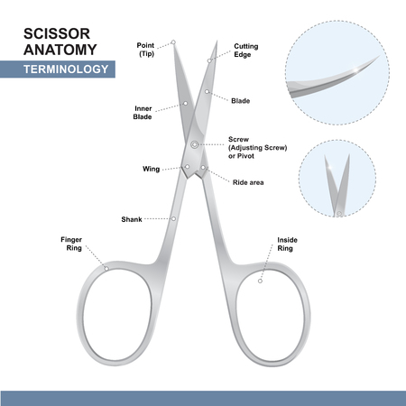 Parts of Nail Cutting Shears. Terminology of Scissors. Manicure and Pedicure Care Tools. Vector Illustration