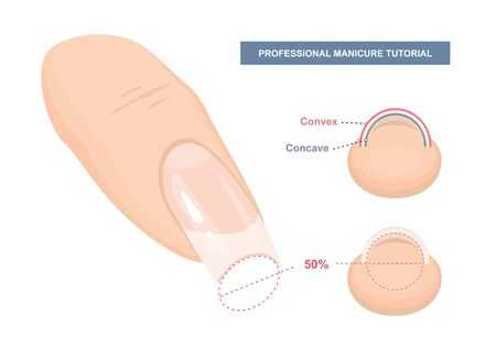 Correct C-curve. Manicure Tutorial. Nail Extension Guide. Tips and Tricks. Vector Illustration  イラスト・ベクター素材