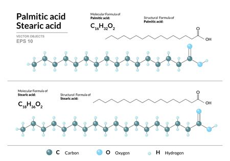 Palmitic and Stearic acids. Hexadecenoic and Octadecanoic Acids. Structural chemical formula and molecule 3d model. Atoms with color coding. Vector illustration  イラスト・ベクター素材