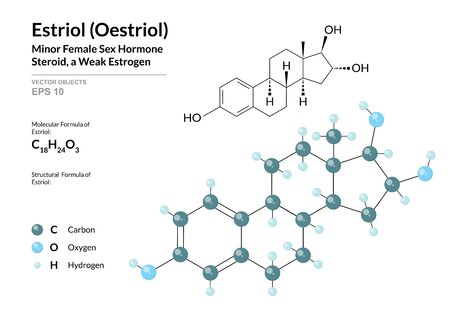 Estriol (Oestriol). Structural Chemical Formula and Molecule 3d Model. Atoms with Color Coding. Vector Illustration