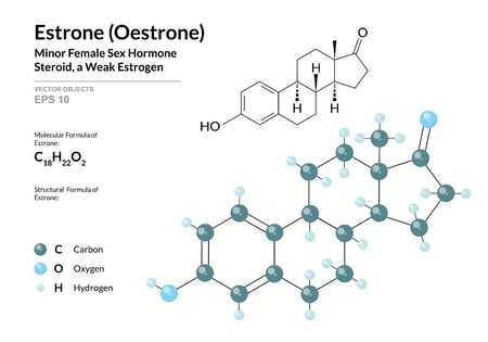 Hormone Estrone (Oestrone). Structural Chemical Formula and Molecule 3d Model. Atoms with Color Coding. Vector Illustration