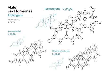 Testosterone, Androstenediol, Dihydrotestosterone. Male Sex Hormones. Structural Chemical Formula and Molecule Model. Line Design. Vector Illustration