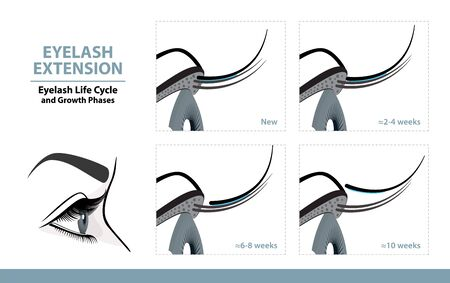 Lash Extension Life Cycle. How Long Do Eyelash Extensions Stay On. Side View. Infographic Vector Illustration   イラスト・ベクター素材