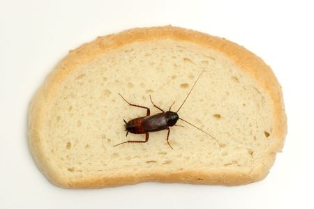 scavenging: Cockroach on a slice of bread Stock Photo