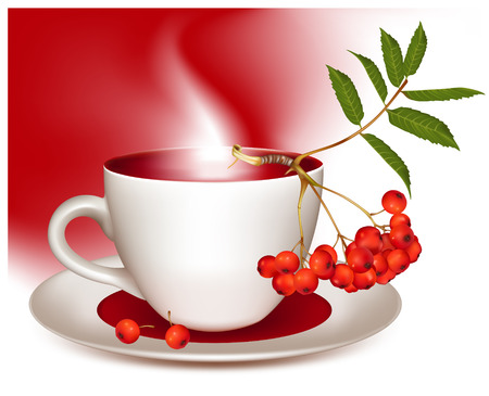 ashberry: Vector illustration. Cup of tea and ripe ashberry.