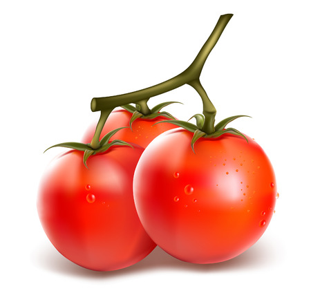 Vector ripe fresh tomatos with water drops  Illustration