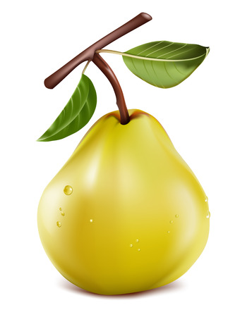 photorealistic: Photo-realistic. Ripe pear with water drops. Illustration
