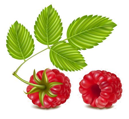 illustration of ripe raspberry.