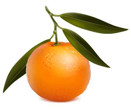 tangerines: Photo-realistic. Mandarin with leaves.