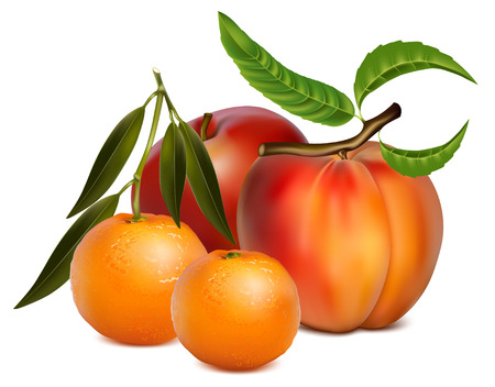 tangerine: illustration of fruits.
