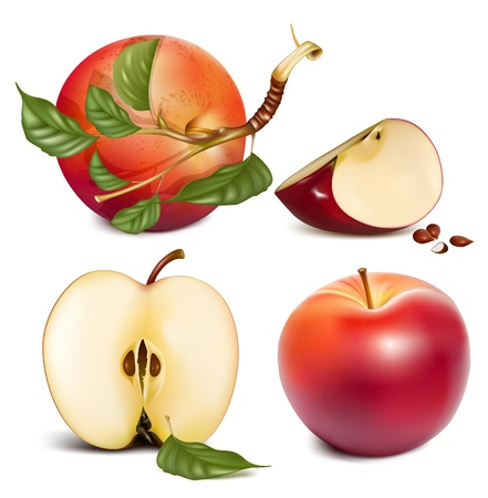 Vector. Ripe red apples with green leaves. Vector