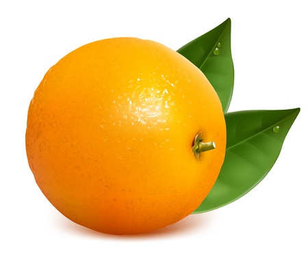 ripe: Vector fresh ripe orange with leaves. Illustration