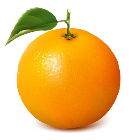naranja fruta: Vector fresca madura naranja con hojas. Vectores