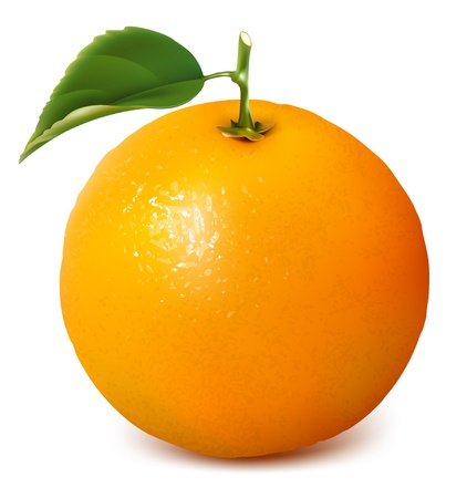 fruit illustration: Vector fresh ripe orange with leaf.