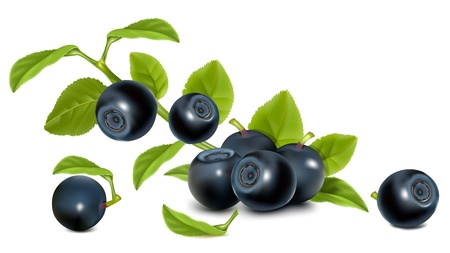 bilberries: Bilberry with leaves.