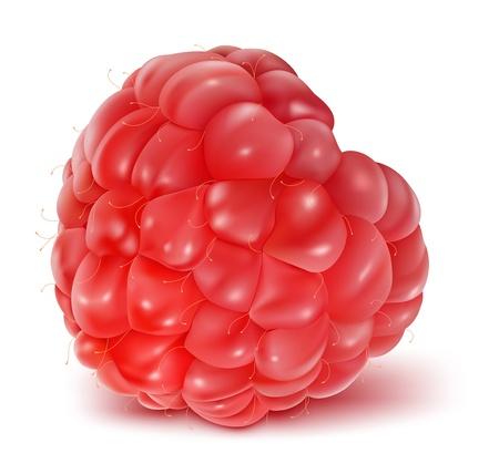 summer diet:  illustration of ripe raspberry.