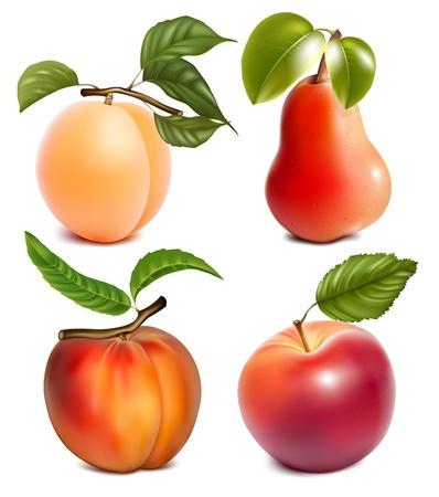 梨: フォトリアリスティックな果物。  イラスト・ベクター素材