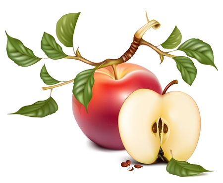 half apple: Vector. Ripe red apples with green leaves.