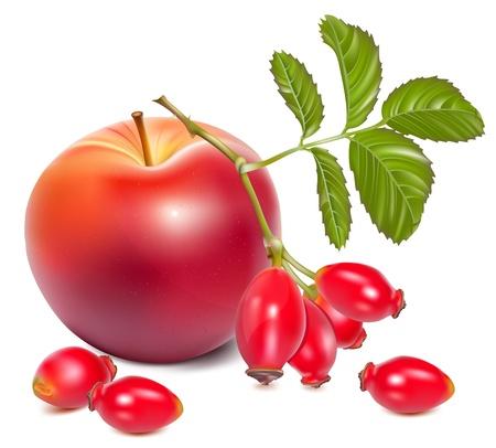 rose hips: Vector illustration.  Red ripe apples and rose hip (dog rose hips). Illustration