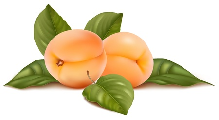 apricot: Vector illustration. Apricots with leaves.