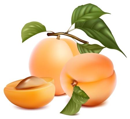 orange cut: Ilustraci�n vectorial. Albaricoques con hojas.