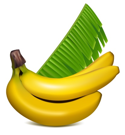 banana: Photo-realistic vector. Ripe yellow bananas with leaves.