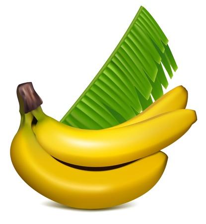 Wektor fotorealistycznych. Dojrzałe żółte banany z liśćmi.