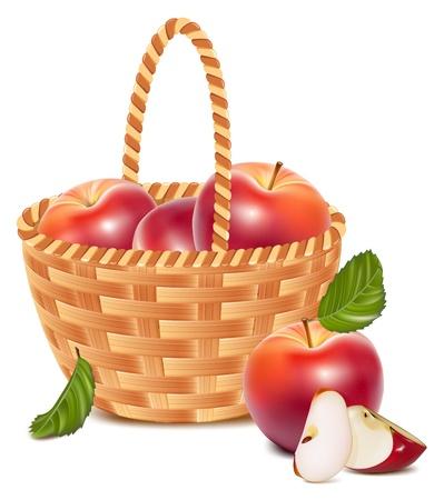 mimbre: Vector. Manzanas rojas maduras en la cesta. Vectores