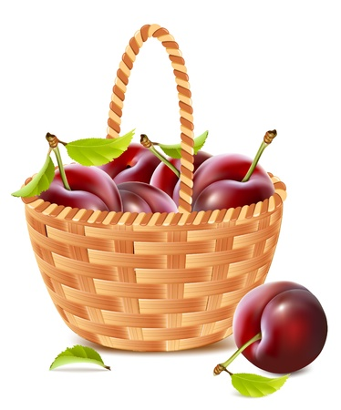 wicker: Vector. Ripe plums in the basket. Illustration