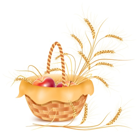 golden apple: Vector. Ears of wheat and apple in the basket. Illustration
