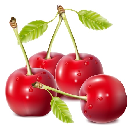 mellow: Vector illustration. Cherries with water drops. Illustration