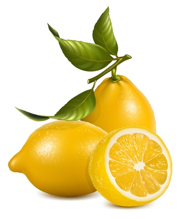 tropical fruits: Vector. Fresh lemons with leaves.