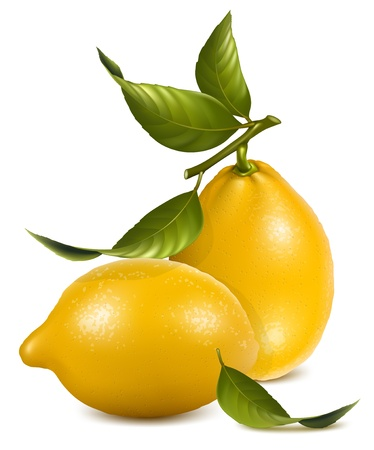 citric: Vector. Fresh lemons with leaves.