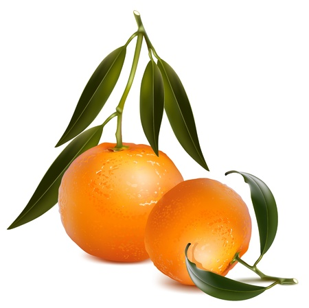 Photo-realistic vector. Fresh tangerine with green leaves.