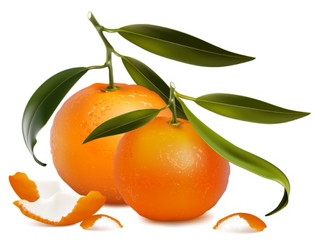 Photo-realistic vector. Fresh tangerine fruits with green leaves and tangerine peel.