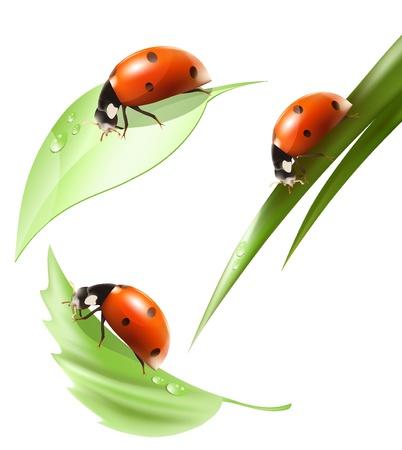 Vector. Lieveheersbeestje op blad en gras met water druppels.