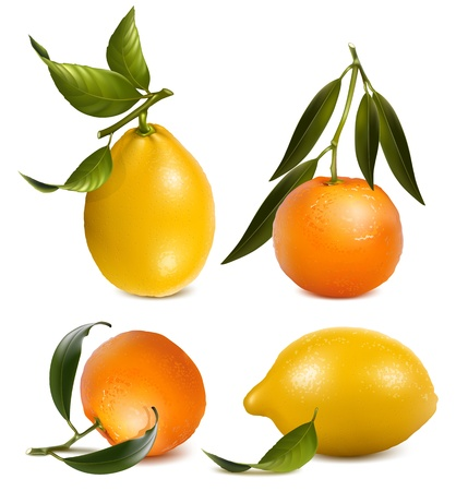 citric: Vector tangerines and lemons with leaves.