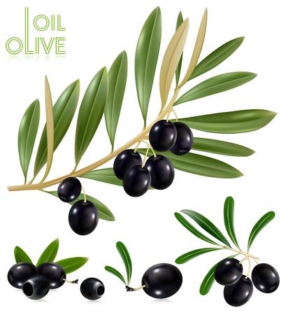 Foto-realistas de ilustración vectorial. Aceitunas negro con hojas.