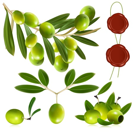 Photo-realistic vector illustration. Green olives with leaves. Vector