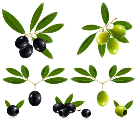 Photorealistic vector illustration. Green  and black olives with leaves. Vector