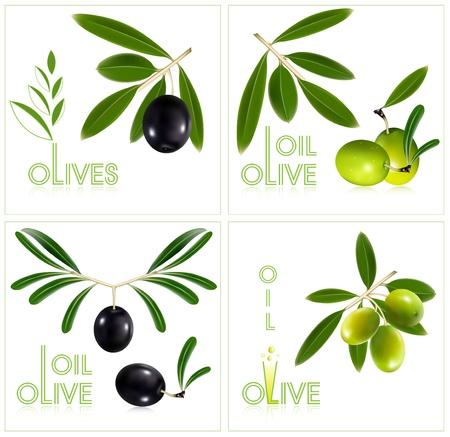 logo de comida: Ilustraci�n vectorial fotorrealista. Aceitunas verdes con hojas. Vectores