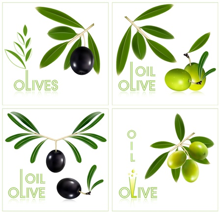 picking fruit: Photorealistic vector illustration. Green olives with leaves.