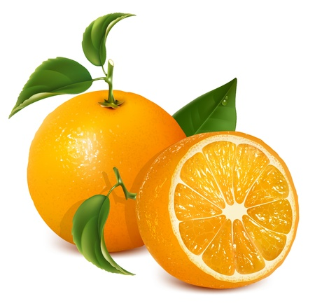 Vector fresh ripe oranges with leaves. 일러스트