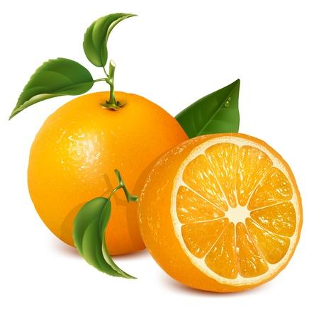 Vektorové čerstvé zralé pomeranče s listy. Ilustrace