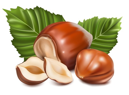 Photo-realistic vector illustration. Hazelnuts with leaves. Ilustração