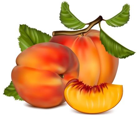 복숭아: 벡터 일러스트 레이 션. 녹색 잎으로 잘 익은 복숭아 과일.